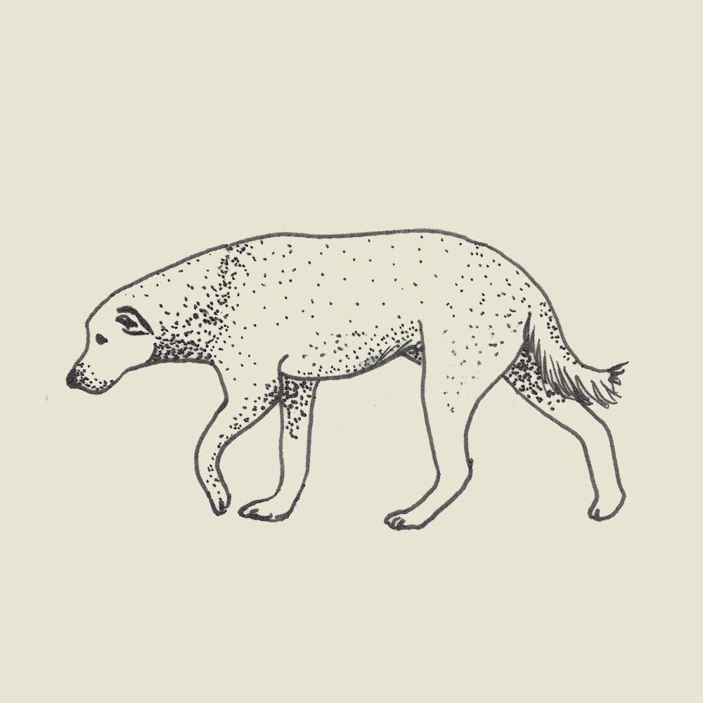 Crete-square-dog
