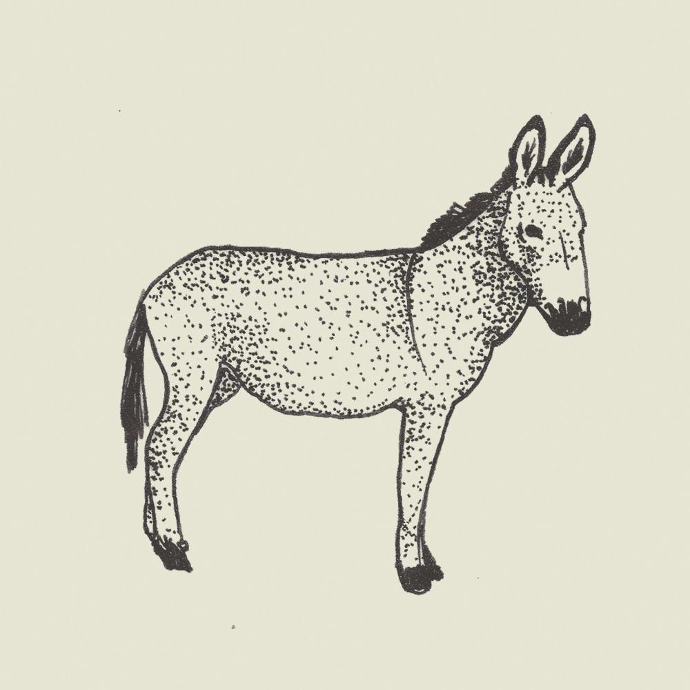 Crete-square-donkey