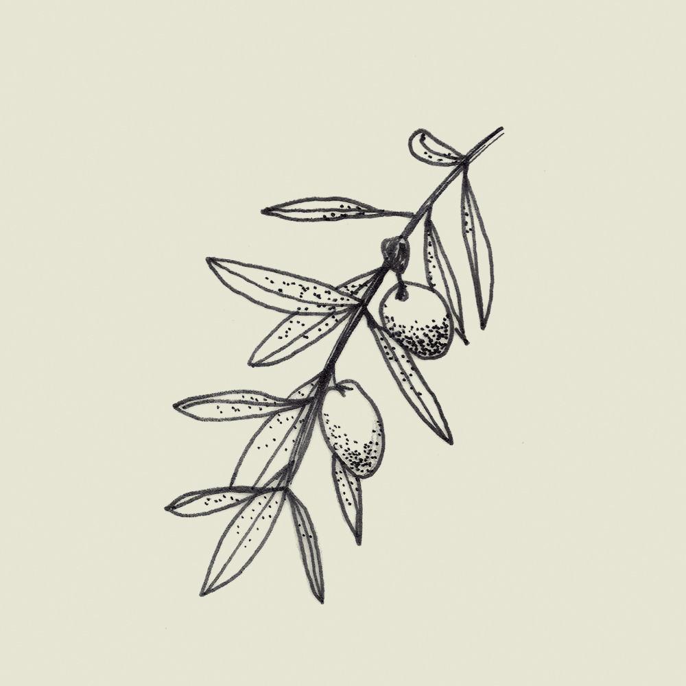 Crete-square-illus-olive