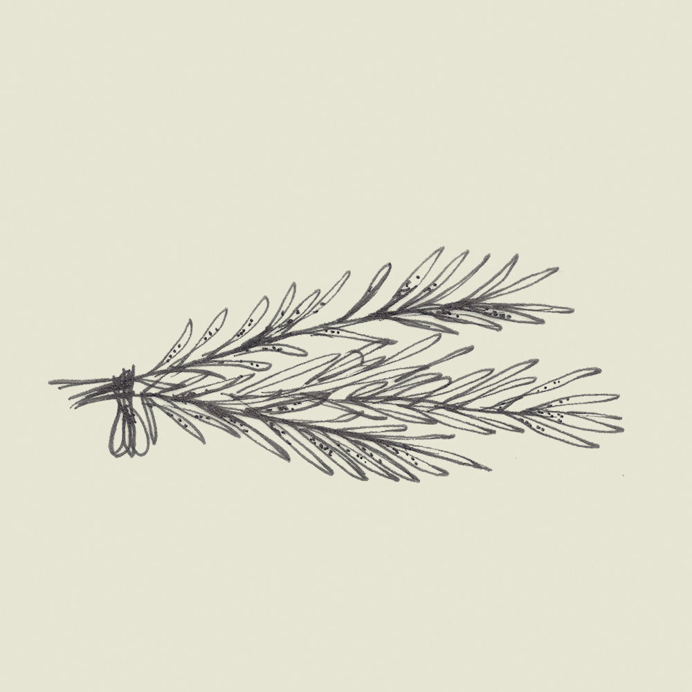 Crete-square-illus-rosemary