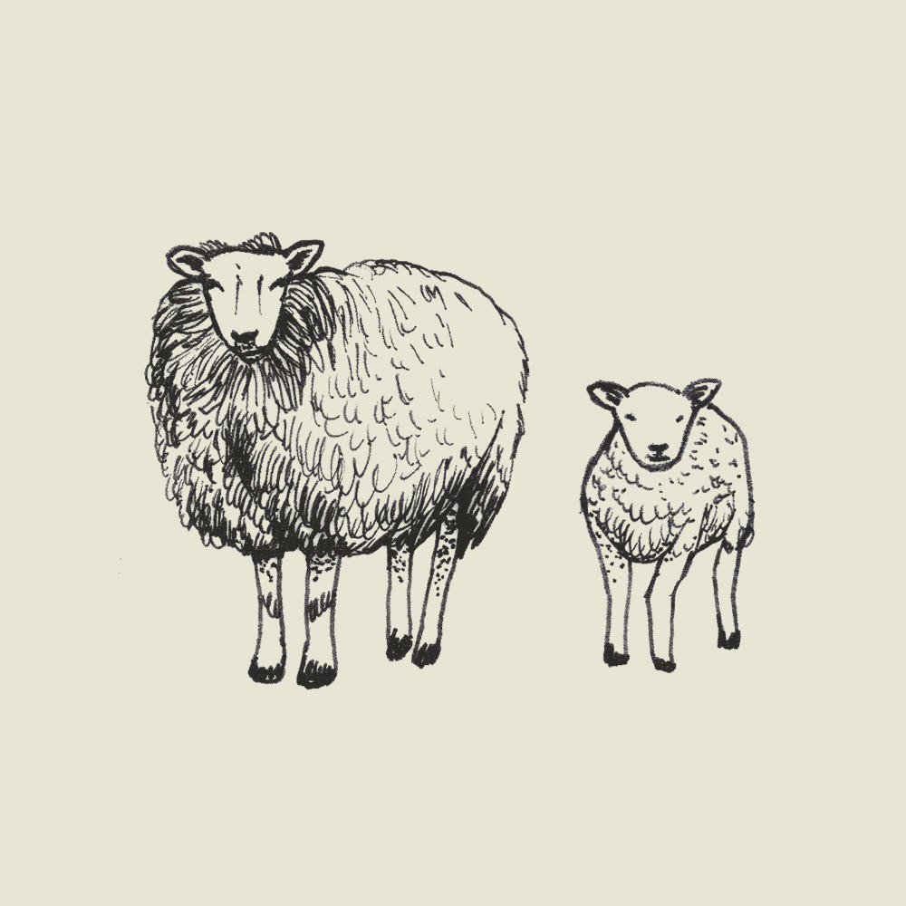 Crete-square-illus-sheep