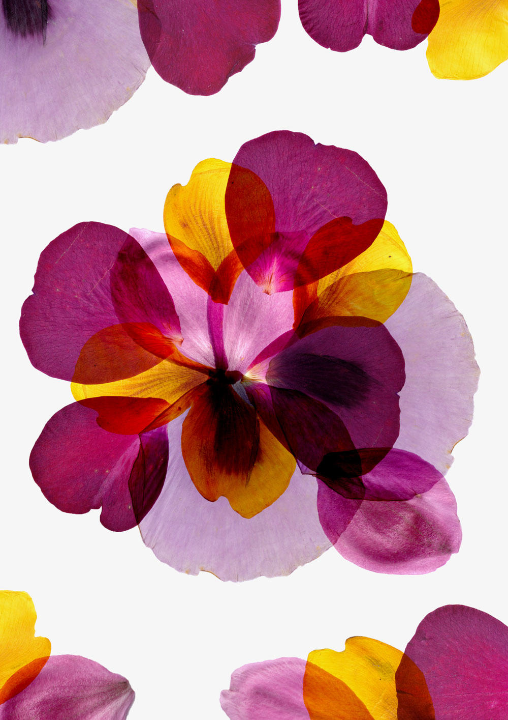 Flower-bomb-kinlake-01