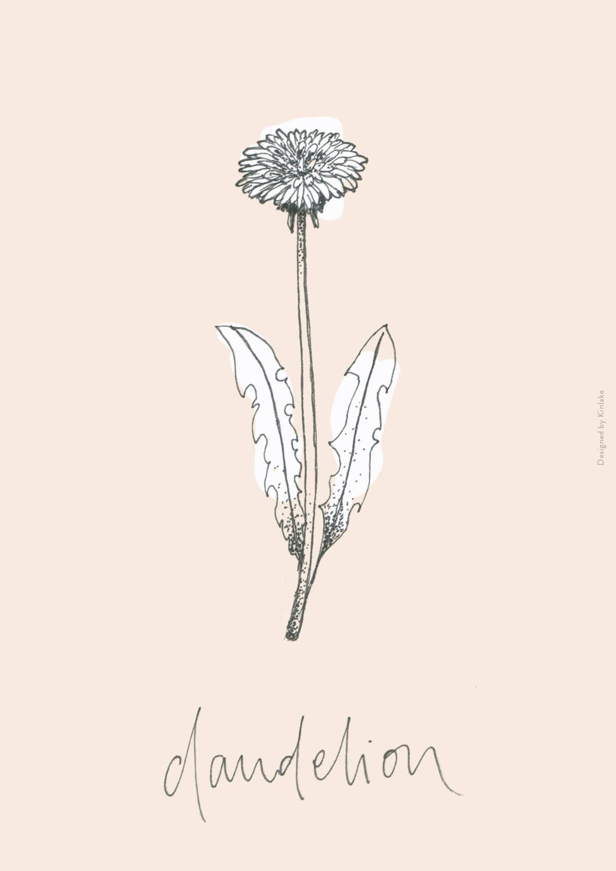 A4-Edible-Weeds-Kinlake-dandelion