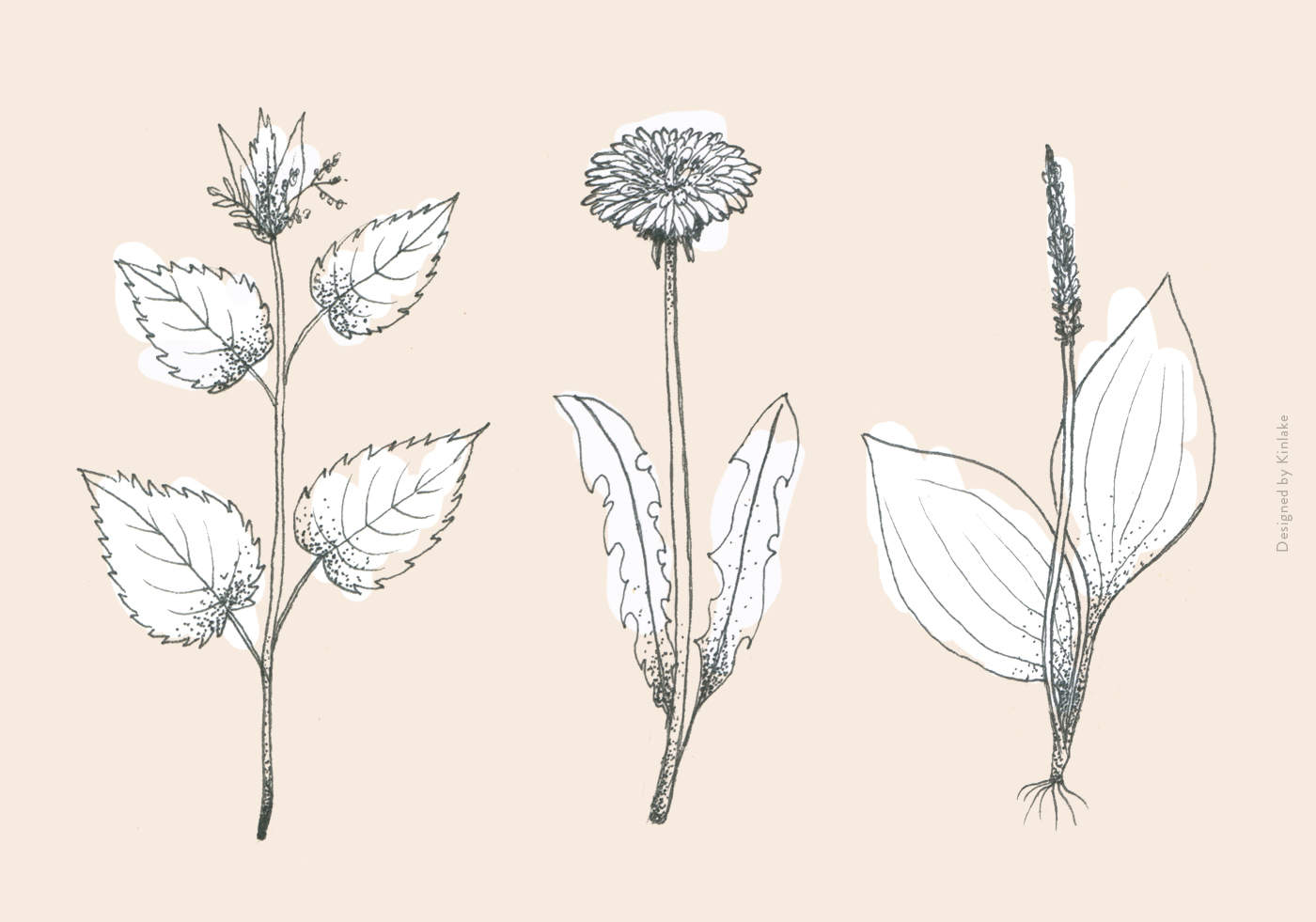 Weeds-Illustration-Featured
