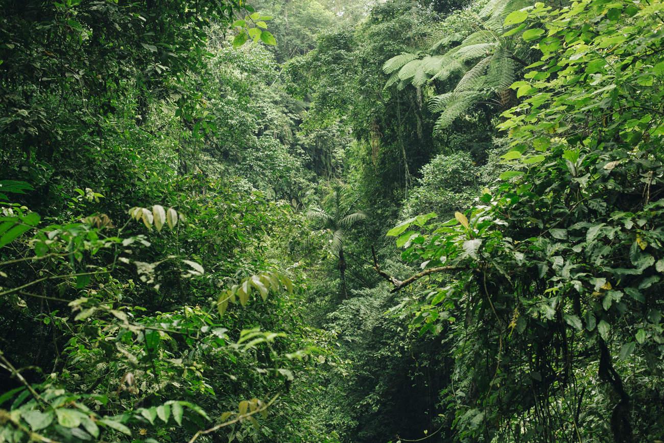 Kinlake-Nungnung-Waterfall-Bali