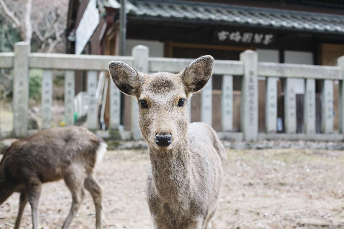 Kinlake-Japan-City-Lifestyle-9469