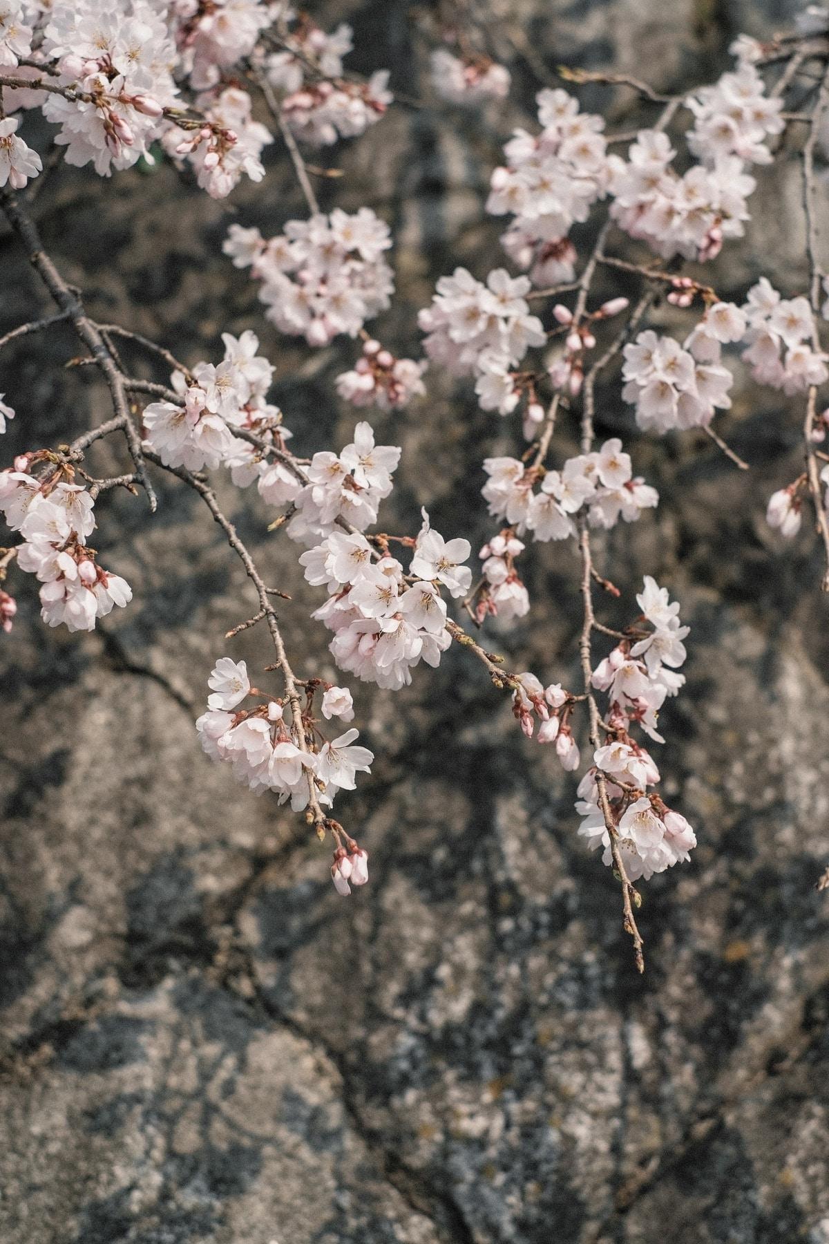 Kinlake-Kyoto-Lifestyle-2018-7047