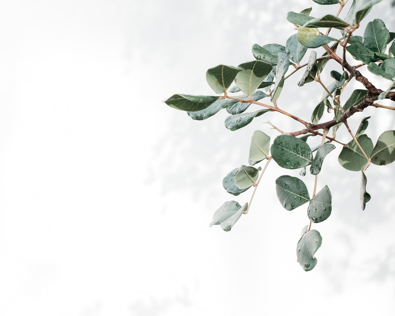 Botanical-Kinlake-Lifestyle-Creative-2772