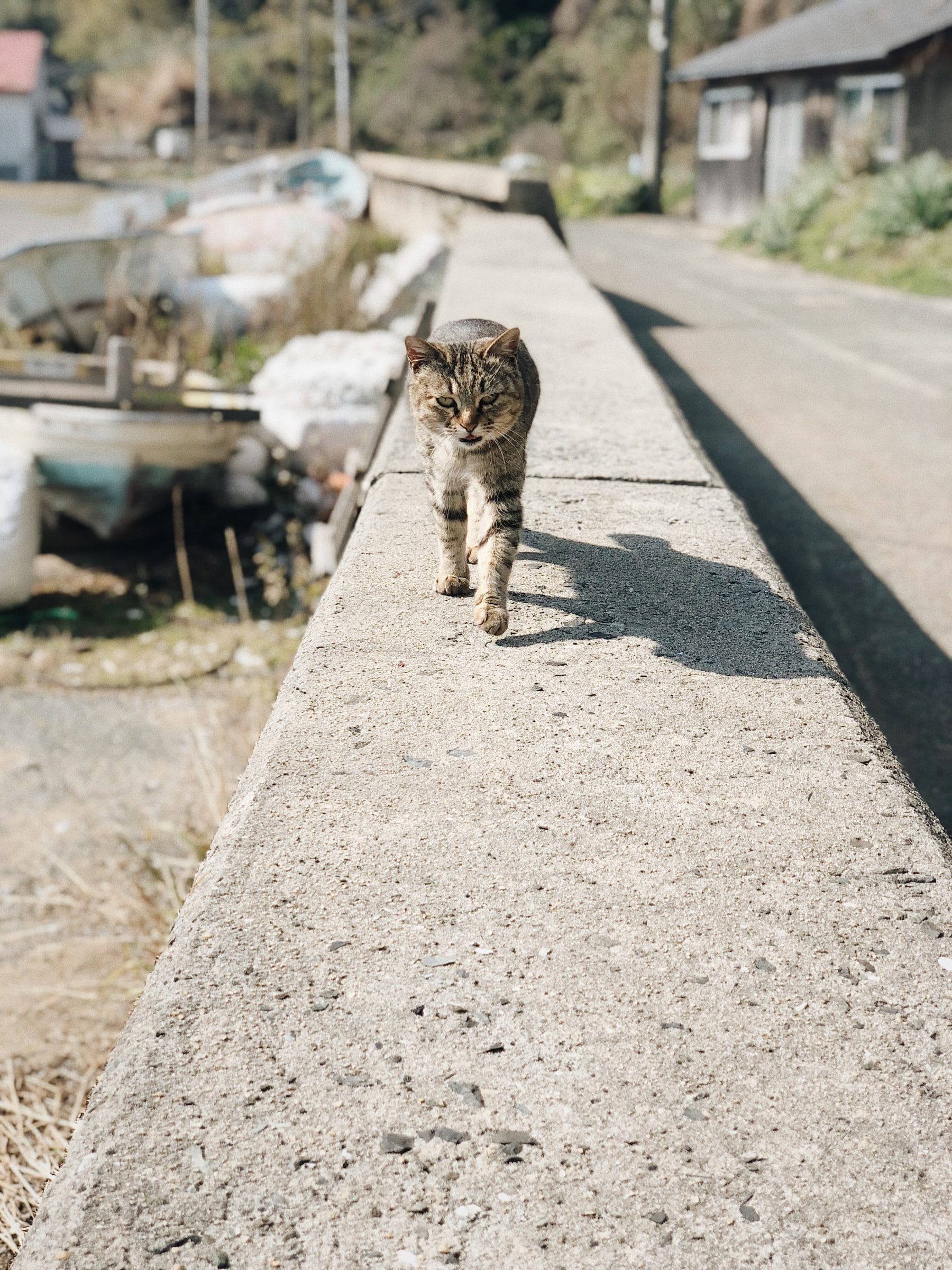 Kinlake-Japan-Cat-Island-5820