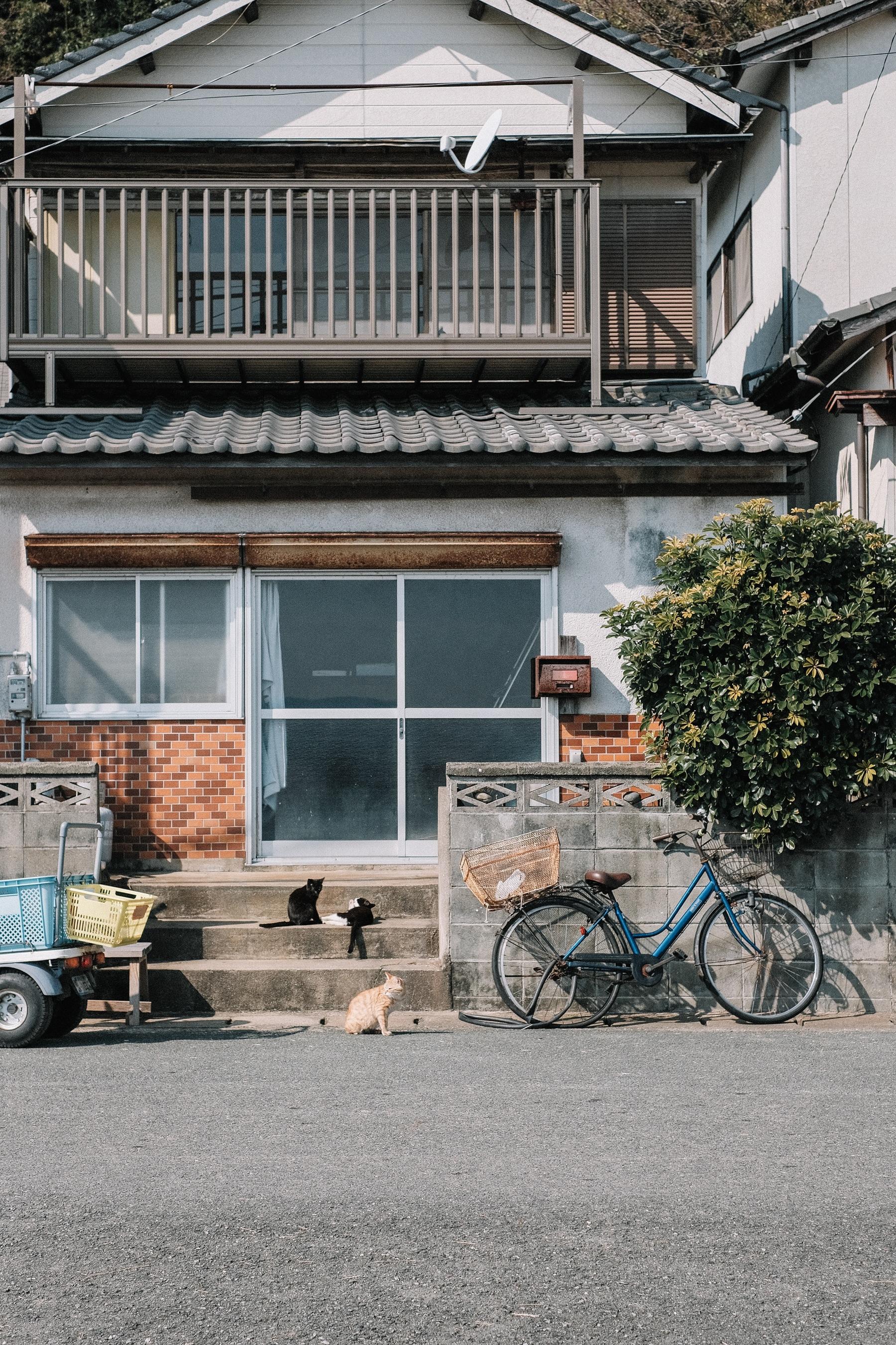 Kinlake-Japan-Cat-Island-5757