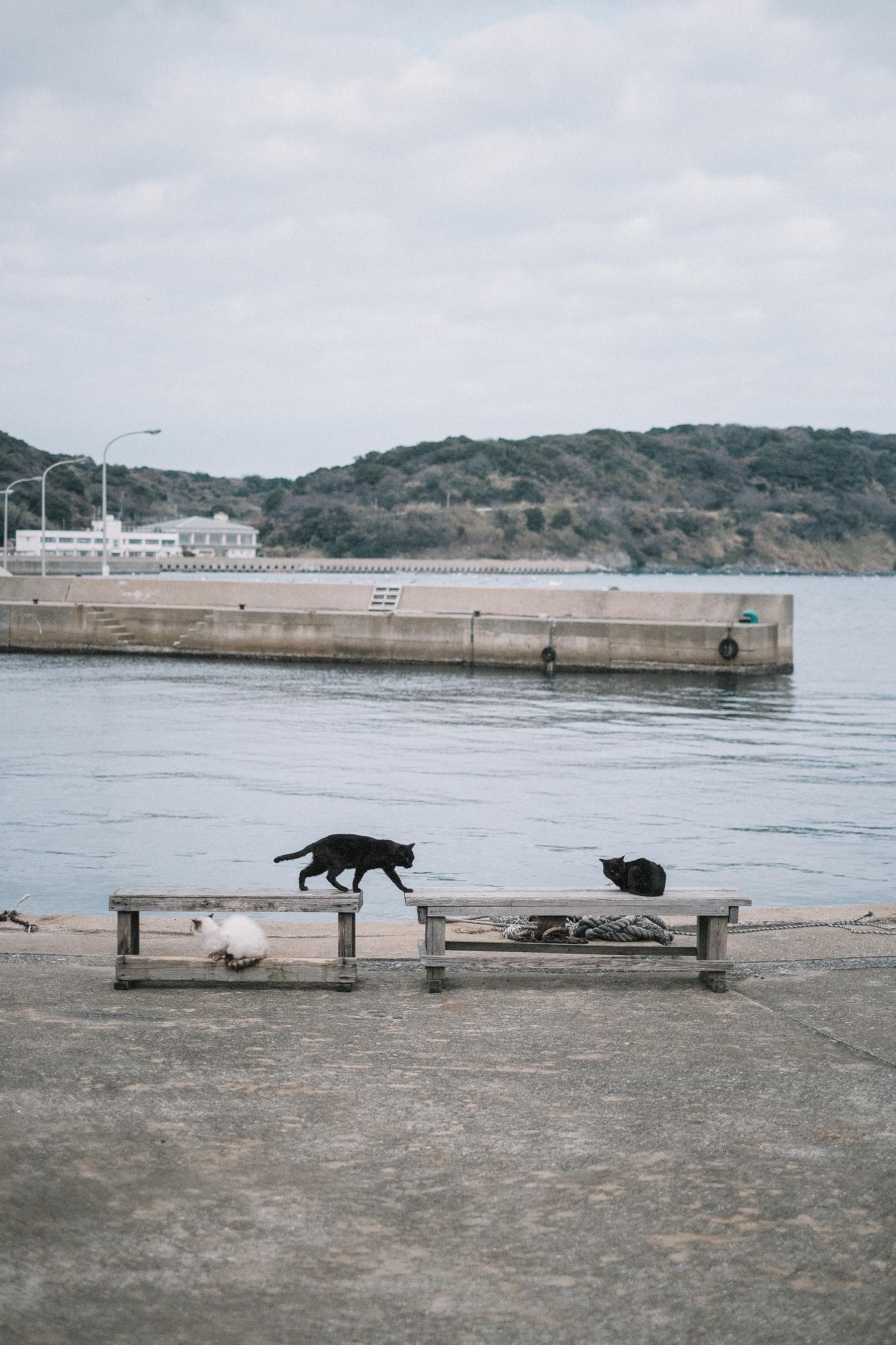 Kinlake-Japan-Cat-Island-5810
