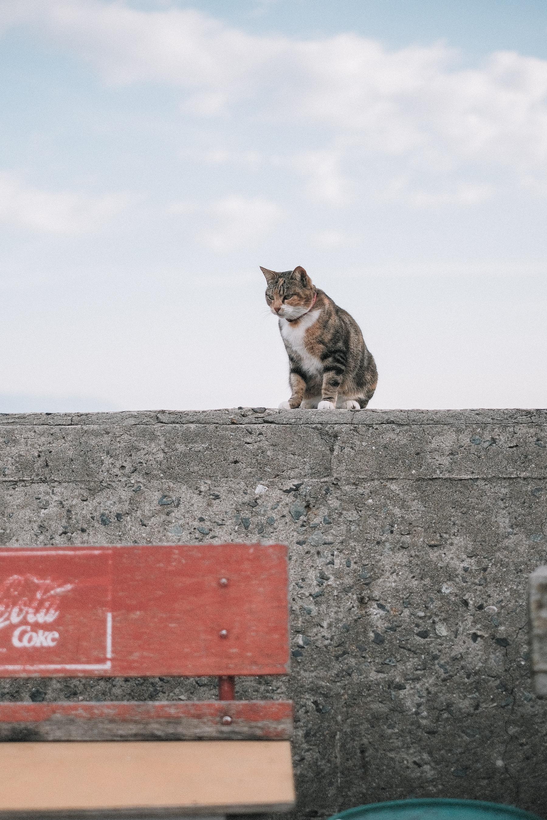 Kinlake-Japan-Cat-Island-5846