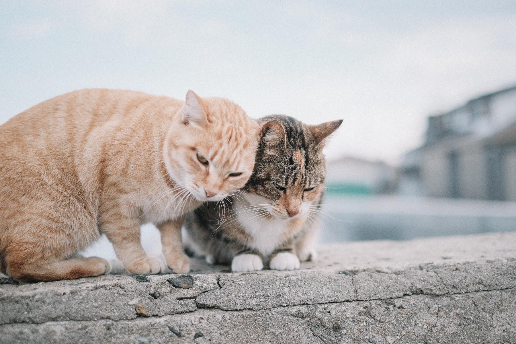 Kinlake-Japan-Cat-Island-5853