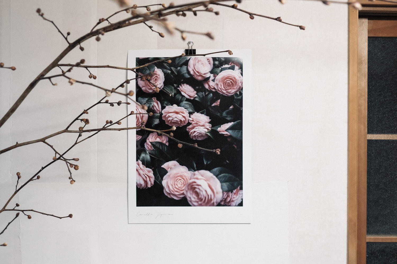 Kinlake-Camellia-Japonica-Print-2018-7619