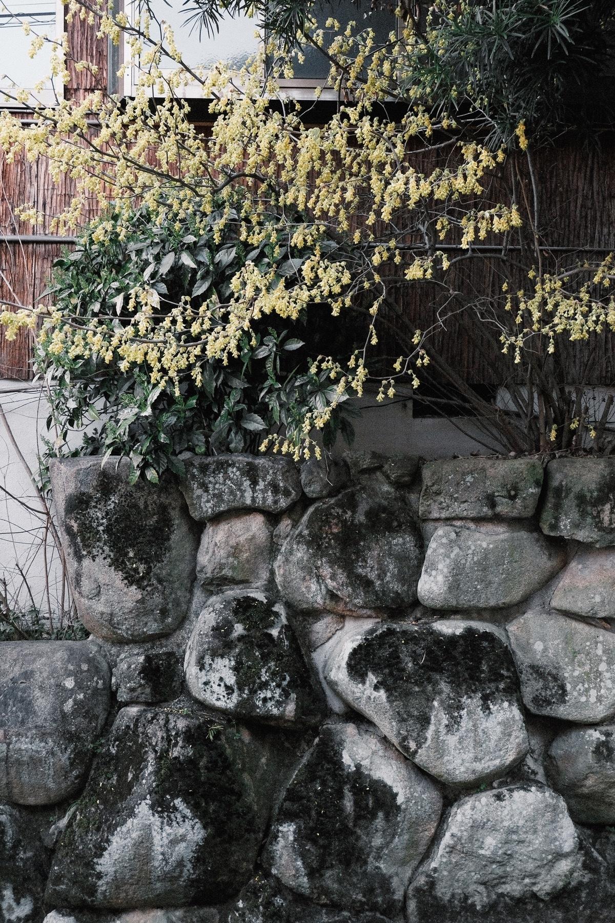 Kinlake-Kyoto-Lifestyle-2018-7013