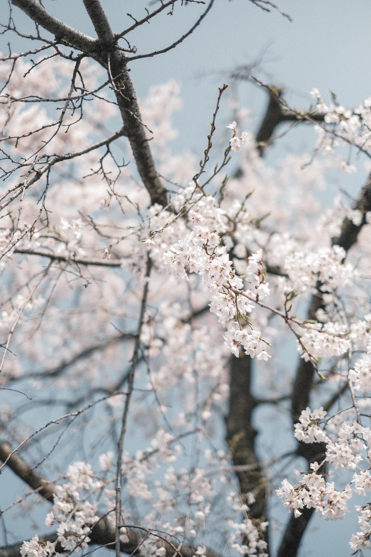 Kinlake-Kyoto-Lifestyle-2018-7040