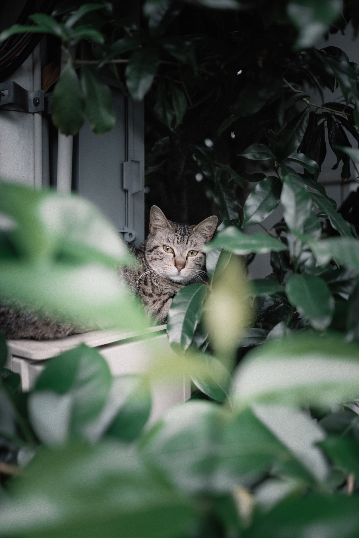 Kinlake-Kyoto-Lifestyle-2018-8729